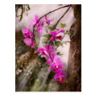 Orchid - Tropical Passion Postcard