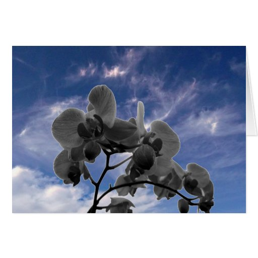 Orchidee Cards