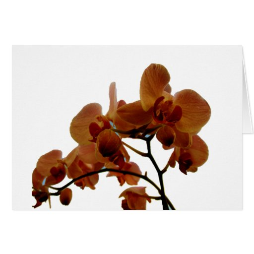 Orchidee Greeting Card