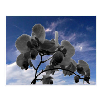 Orchidee Postcards