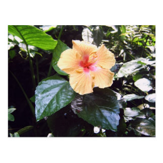 Orchidee Postkarten