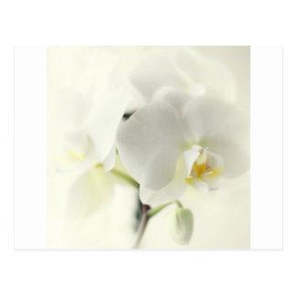 Orchideen Postkarten