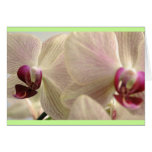 Orchids #1