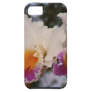 Orchids at Sunset Case For The iPhone 5