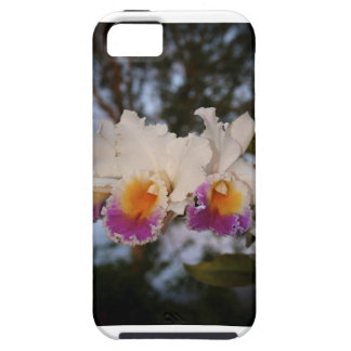 Orchids at Sunset iPhone 5 Covers