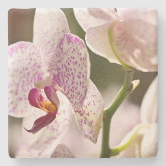 Orchids by Shirley Taylor Stone Beverage Coaster
