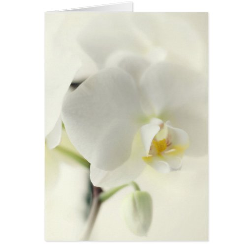 Orchids Cards