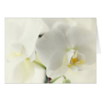 Orchids Card