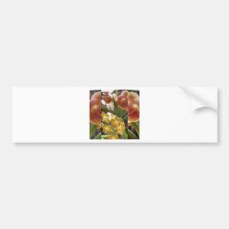 Orchids collage bumper sticker