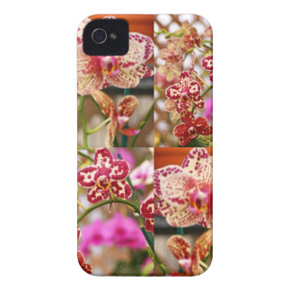 Orchids collage iPhone 4 Case-Mate cases
