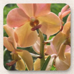 Orchids Drink Coasters