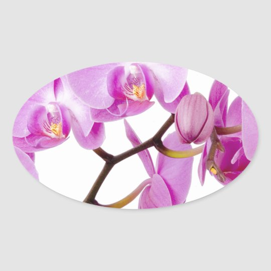 orchids-flowers.jpg oval sticker
