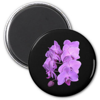 orchids (fresco style) magnet