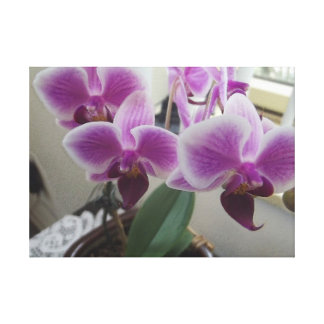 Orchids in the cubicle gallery wrapped canvas