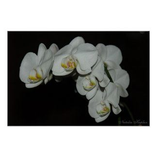 Orchids in the night posters