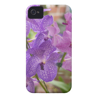 orchids. iPhone 4 covers