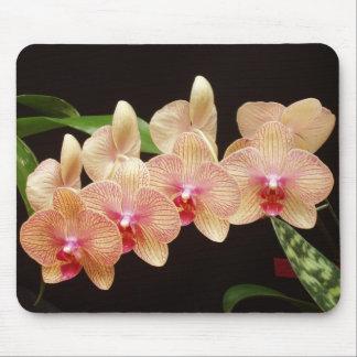 Orchids! Mouse Mat