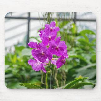 Orchids mousepad
