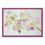 Orchids On White, Happy Birthday!