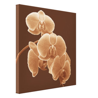 Orchids Photo to Paint in Sepia Canvas Print