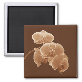 Orchids Photo to Paint in Sepia Magnet