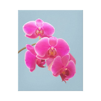 Orchids Photo to Paint on Blue Canvas Print
