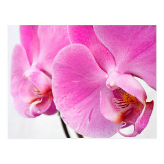 Orchids Post Cards