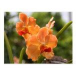 Orchids Postcard