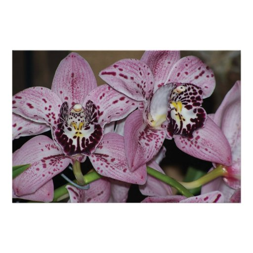 Orchids Posters