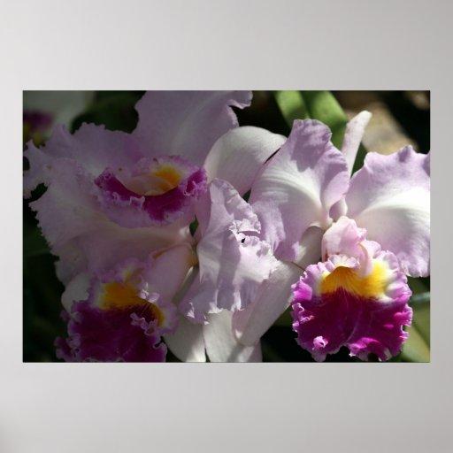 Orchids Print