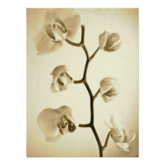Orchids {Sepia} | Poster