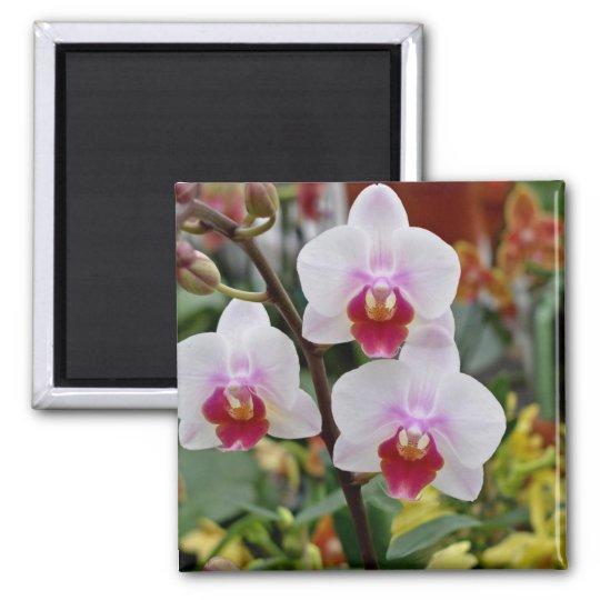Orchids Square Magnet