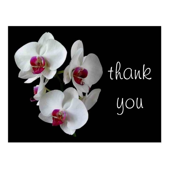 orchids: thank you! postcard