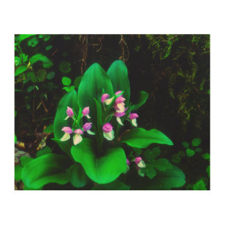 Orchis Wildflowers Wood Wall Decor