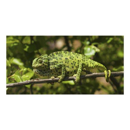 Ordinary European Chameleon Stress Staining Custom Photo Card