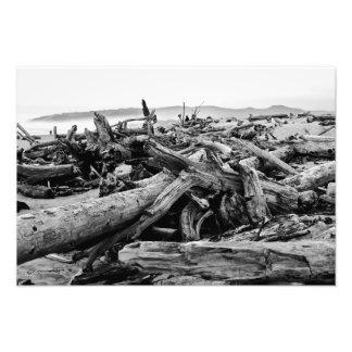 Oregon Coast Driftwood Black and White Print Photo