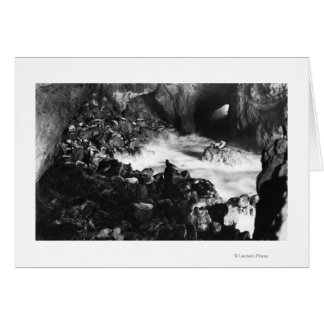 Oregon Coast Sea Lion Caves Interior View Greeting Card