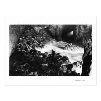 Oregon Coast Sea Lion Caves Interior View Postcard