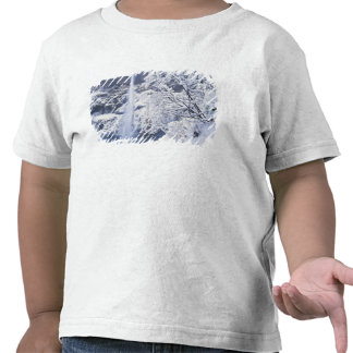 Oregon, Columbia Gorge National Scenics Area, Shirt
