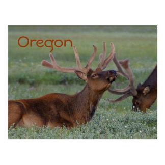 Oregon elk postcard