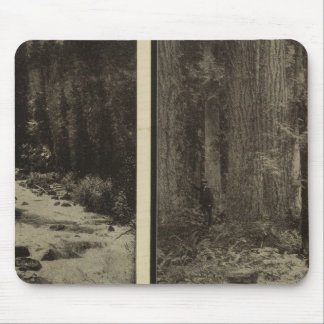Oregon forest giant pines plaza, Salem, Oregon Mouse Pad