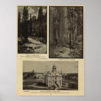 Oregon forest giant pines plaza, Salem, Oregon Poster