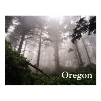 Oregon Forest Postcard