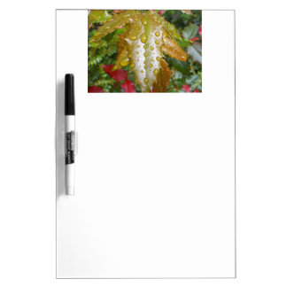 Oregon Grape With Water Drops Dry Erase Boards