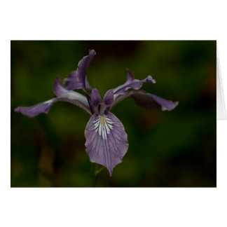 Oregon Iris Card