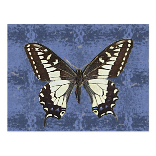 Oregon Swallowtail Butterfly Postcard