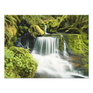 Oregon, Waterfall in Willamette national Photo Print