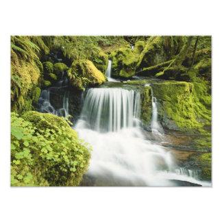 Oregon, Waterfall in Willamette national Photo Print
