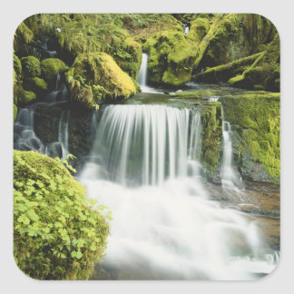 Oregon, Waterfall in Willamette national Square Sticker