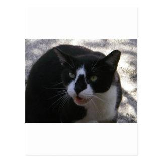 Oreo Cat Postcard